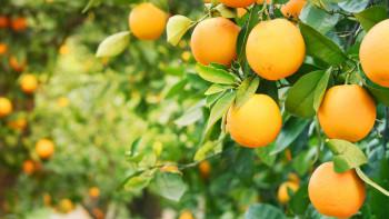 Beneficii ale consumului de portocale